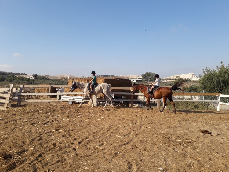 חוות סוסים