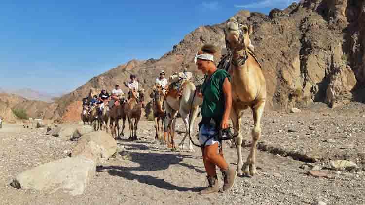 חוות הגמלים באילת, טיול גמלים באילת, אוהלים ממוזגים באילת