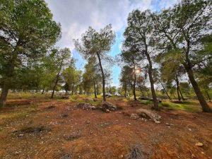 חניון לילה יער בן שמן, מקומות קמפינג במרכז